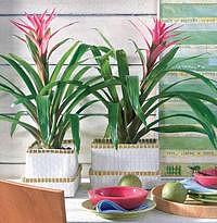 Ako sa starať o exotické rastliny