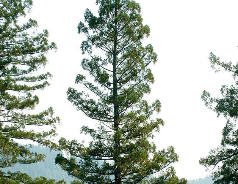 Modelove-stromceky-1